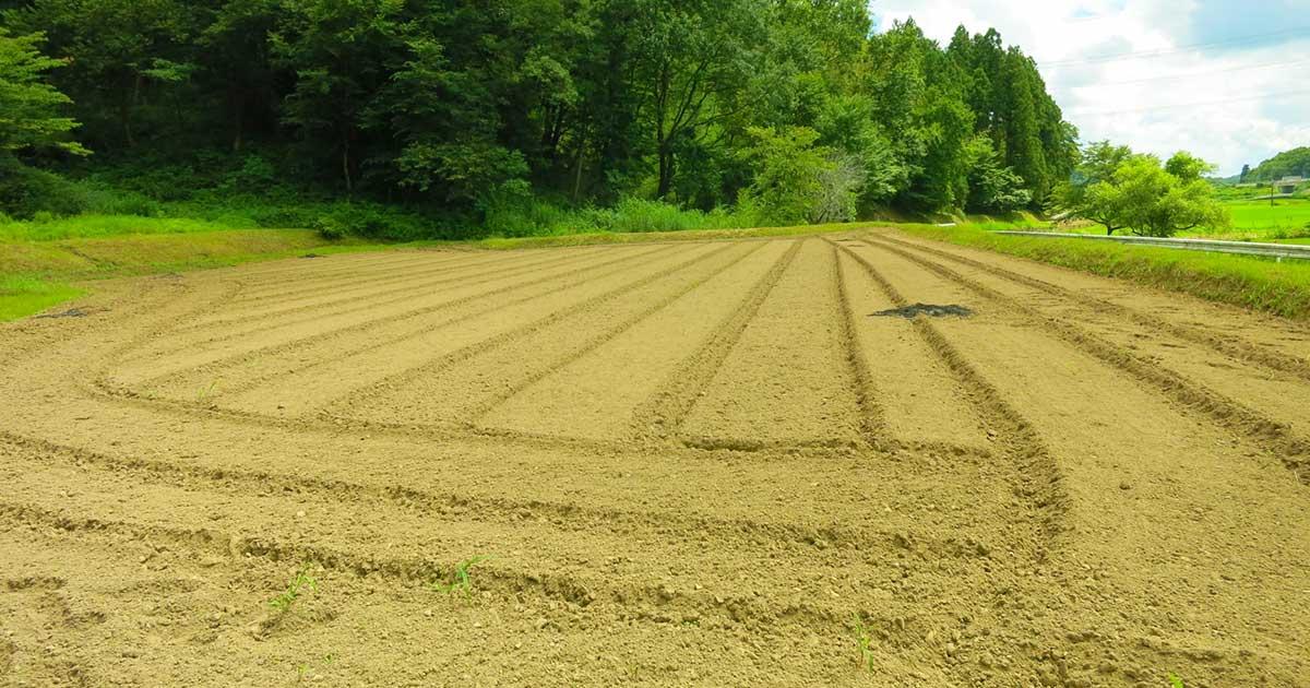 2019年は土地の中でも特に農地の買取りを重視いたします!その3つの理由
